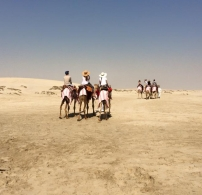 Riding Camels in the Qatari Desert